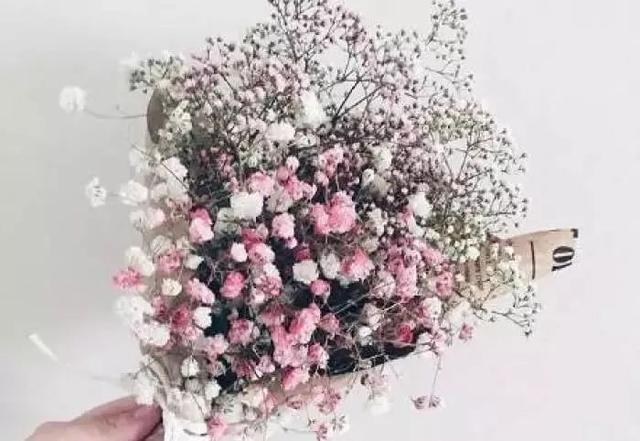 做成干花的满天星美爆了,不同颜色意义也不相同,千万别乱送人~