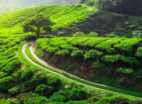 第十四届蒙顶山茶文化旅游节将于3月27日开幕