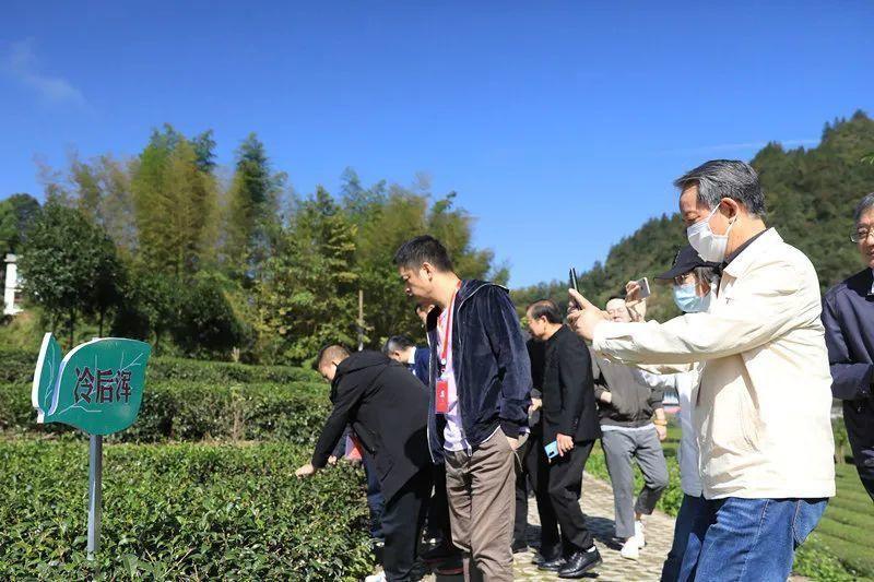 品质很优秀中国红茶高质量发展峰会爱茶人品鉴利川红