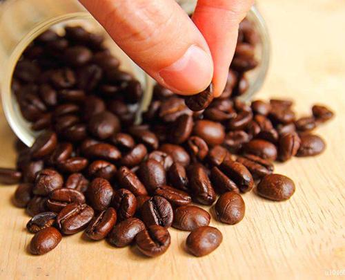 """看好云南咖啡豆发展 全球咖啡界""""大佬""""这样说"""