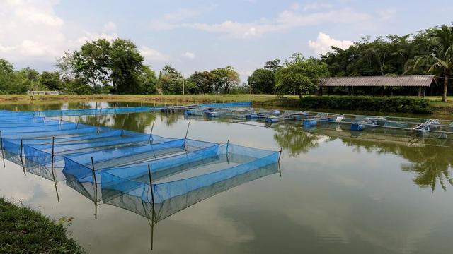 秋冬养鱼明年饱,养鱼的四大管理要点
